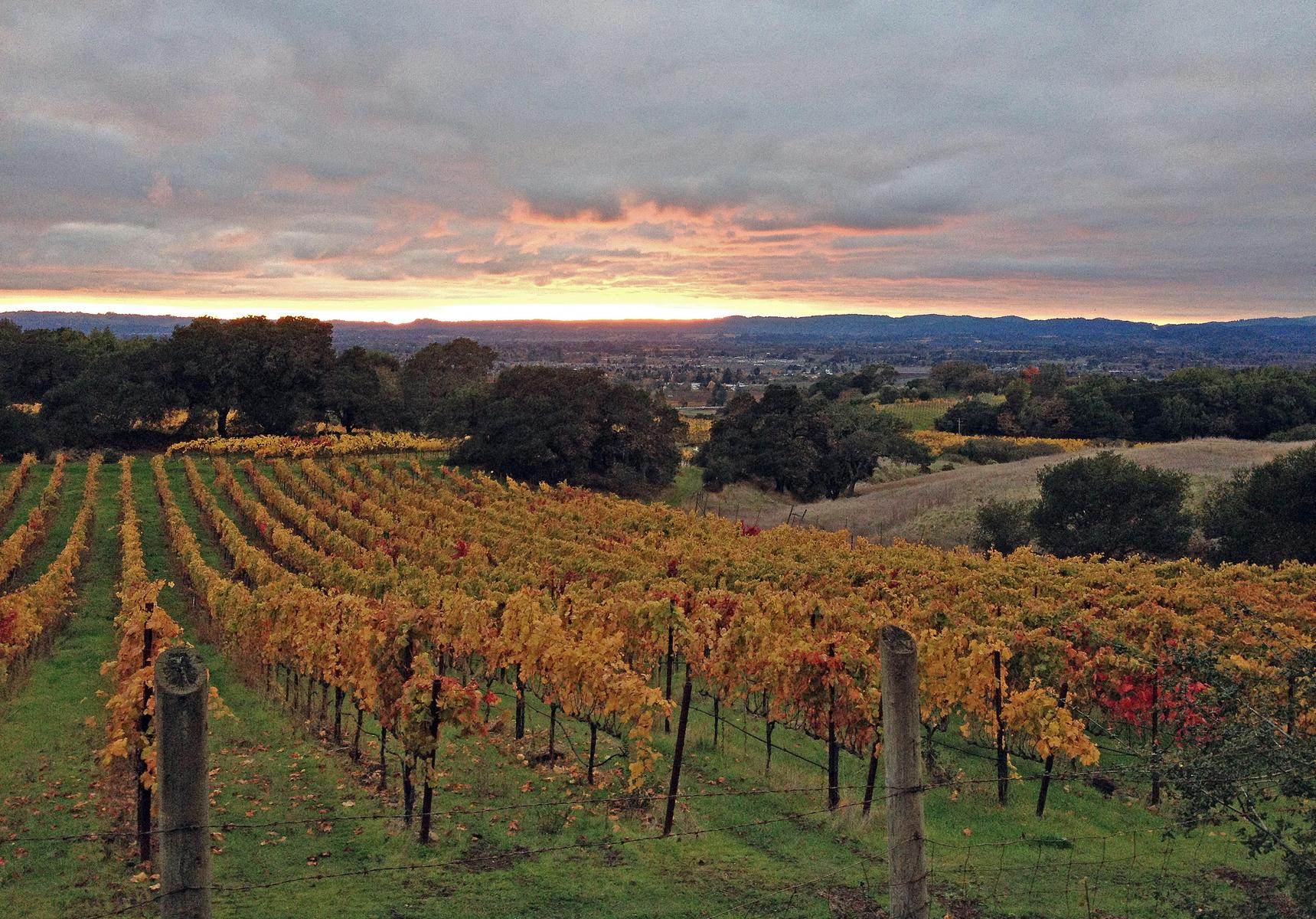 Paradise Ridge winery, Sonoma County, California