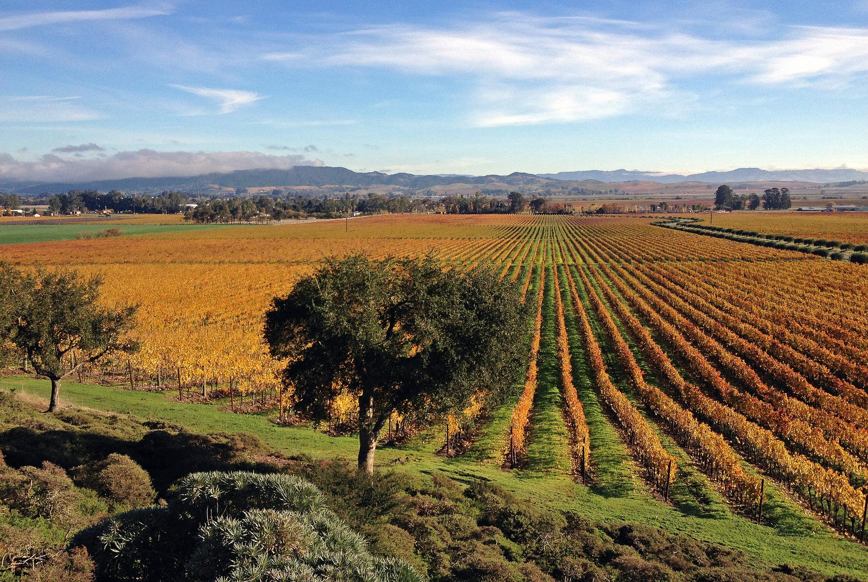 Gloria Ferrer winery, Sonoma Valley, California