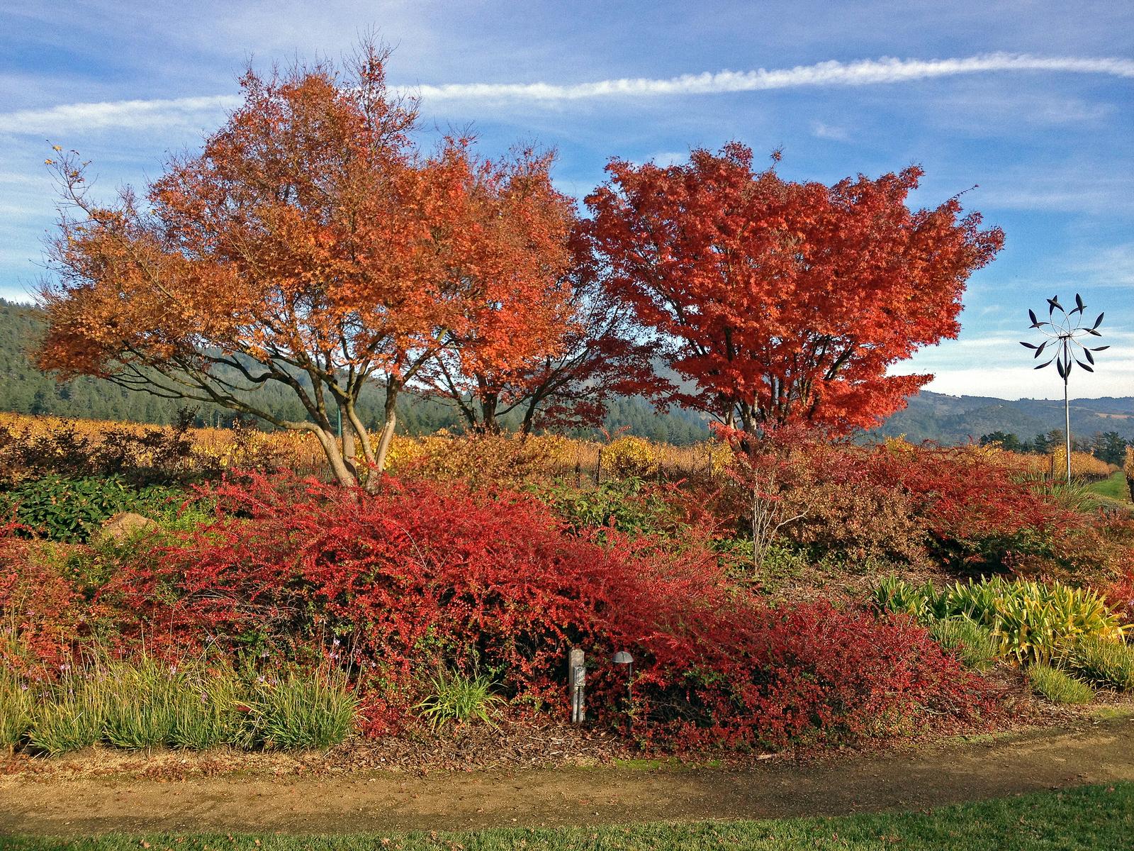 St. Francis winery, Kenwood, Sonoma County, California