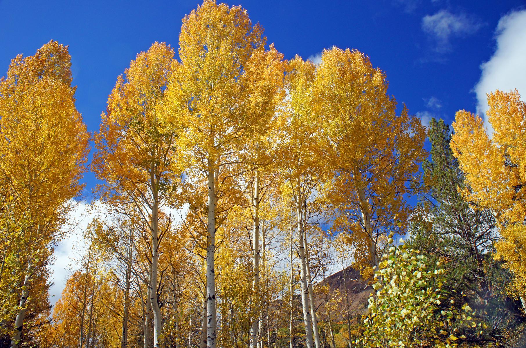 near Spooner Lake, east shore Lake Tahoe, Nevada